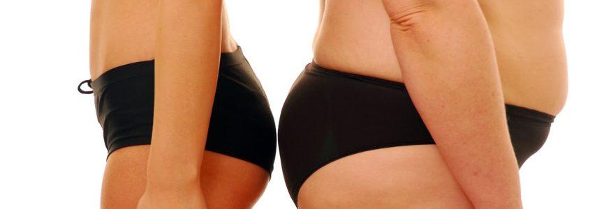 L'obésité, que ratons-nous parfois ?