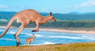 Courir comme un kangourou