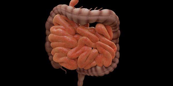 L'intestin, un rôle clé pour la santé